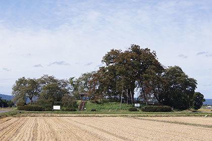 191007高勢の大木④