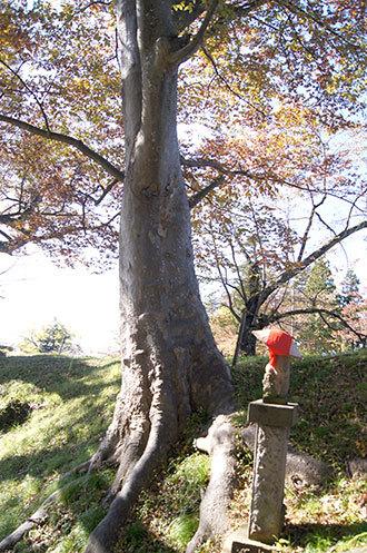 191028鶴ヶ城公園ケヤキ⑤