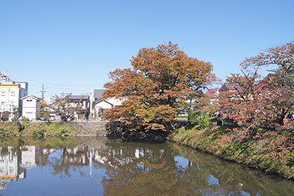 191028鶴ヶ城公園ケヤキ⑧
