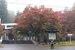 191030士津神社のハイマツ⑥