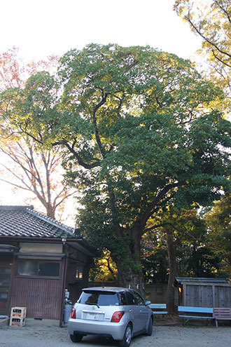 191117草加女体神社タブ③