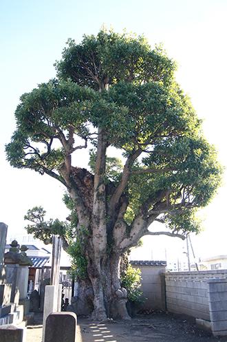 191204西福寺のタブ④