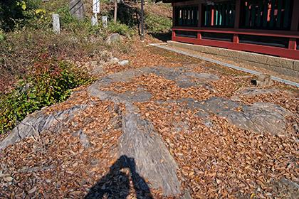 191212三芳野神社大楠⑤