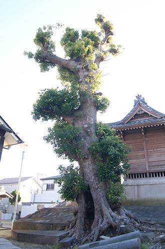 191216三郷彦江神社椨①