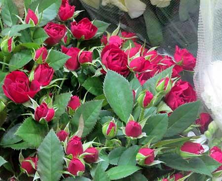 1020薔薇