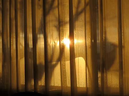 1207朝の陽