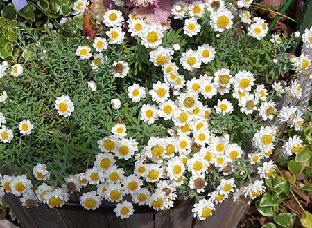 0322白い花