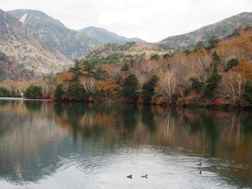 20191027・日光旅行空2-04・湯の湖と水鳥・大