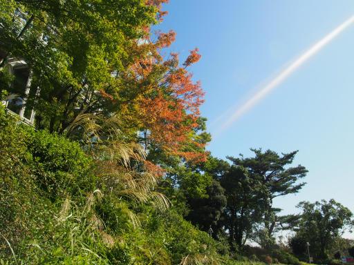20191030・都立薬用植物園へ1-05・掬水亭紅葉