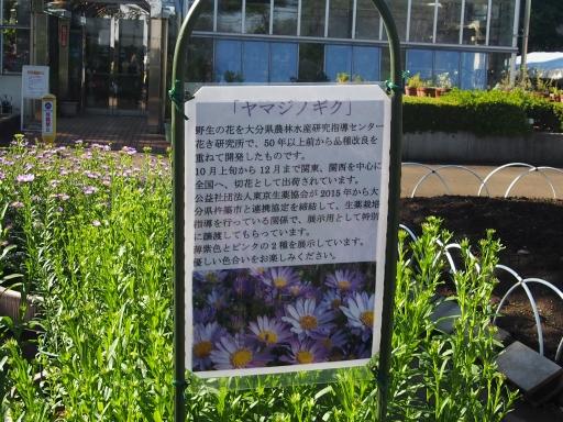 20191030・都立薬用植物園へ1-12・中
