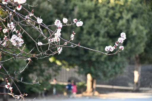 20200224・ニコンで近所撮影2-02・敢えて花にピント