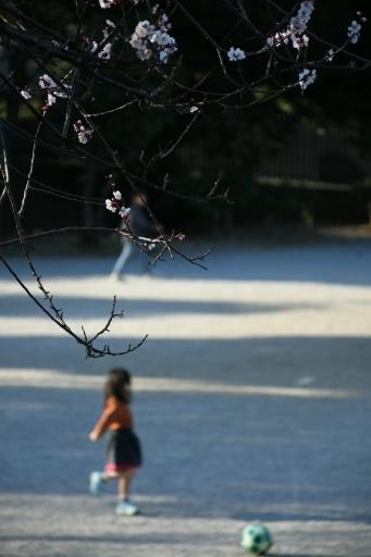 20200224・ニコンで近所撮影小谷公園今日の写真3・大