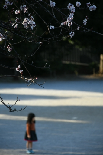 20200224・ニコンで近所撮影小谷公園今日の写真2・大