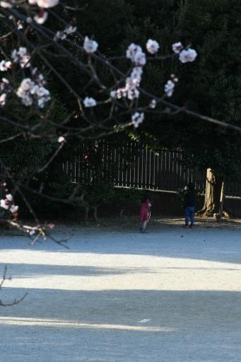 20200224・ニコンで近所撮影小谷公園今日の写真1・大
