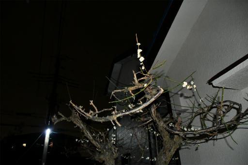 20200301・ニコン夜撮影01(フラッシュ)