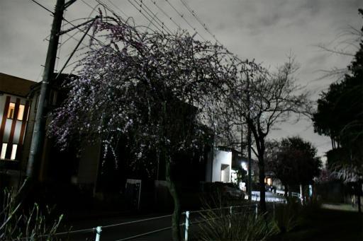 20200301・ニコン夜撮影14(高感度)