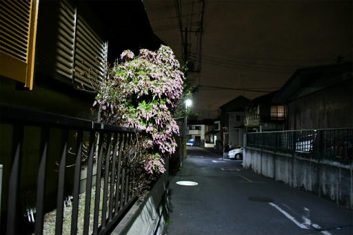20200301・ニコン夜撮影16(高感度)
