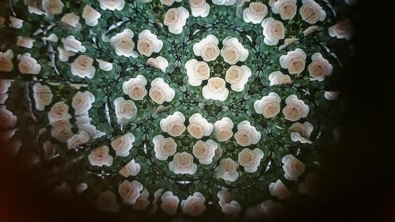 薔薇 (800x450)