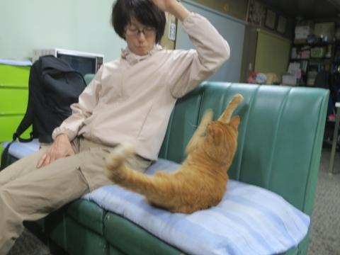 「妻と愛猫、如来くんが戦っていました!」③