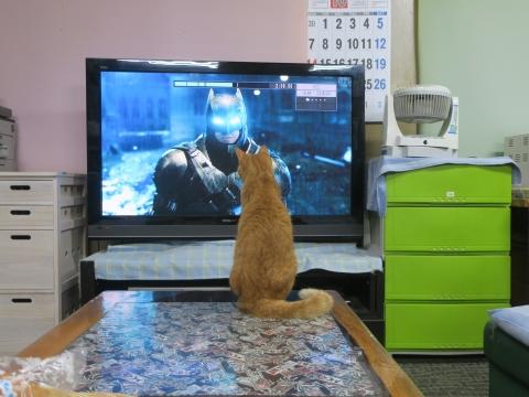 「愛猫、如来くんがバットマンと戦っていました!」①