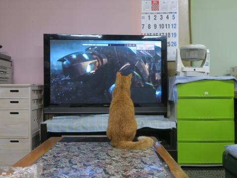 「愛猫、如来くんがバットマンと戦っていました!」②
