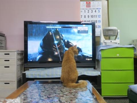 「愛猫、如来くんがバットマンと戦っていました!」③