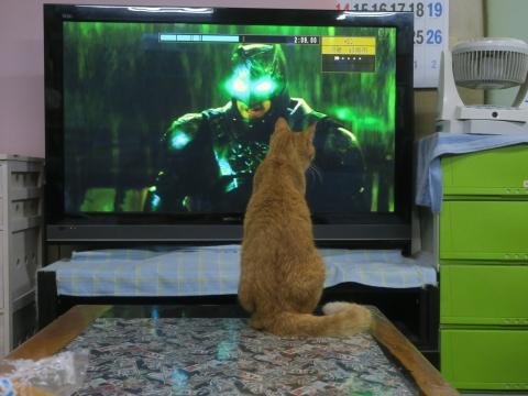 「愛猫、如来くんがバットマンと戦っていました!」④