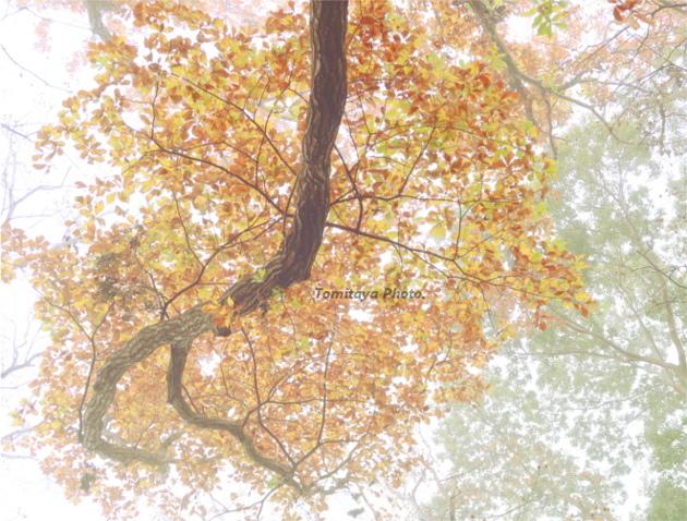 秋 紅葉 木