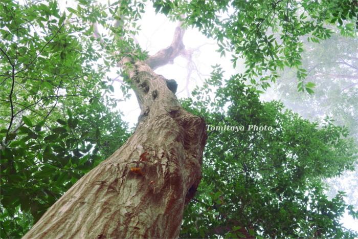 木 緑 空 光