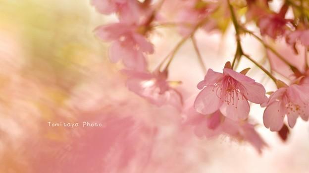 さくら 桜 サクラ メルヘン
