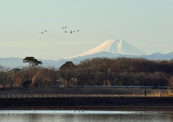 ハクチョウと富士山 DSF_4262
