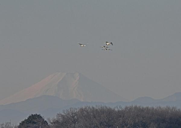 富士山とハクチョウ2 DSV_0801