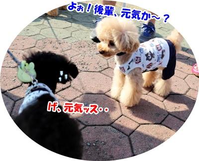 琵琶湖BBQ(待ち合わせ彦根観光)_191021_0039
