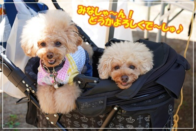 琵琶湖BBQ46