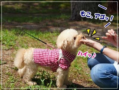 琵琶湖BBQ41