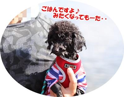 2019825琵琶湖(くうアラ家)_191109_0001