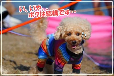 20198 琵琶湖BBQ_湖水浴 (小麦)_191109_0166