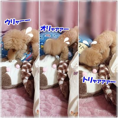 ライチ&モモンガ