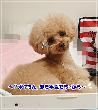 DSC_7391.jpg
