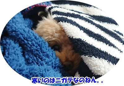 DSC_7551.jpg