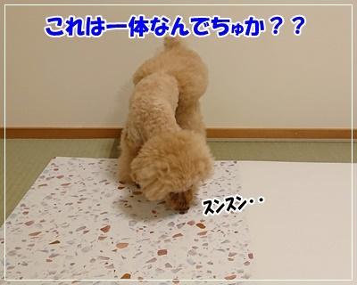 DSC_7721.jpg
