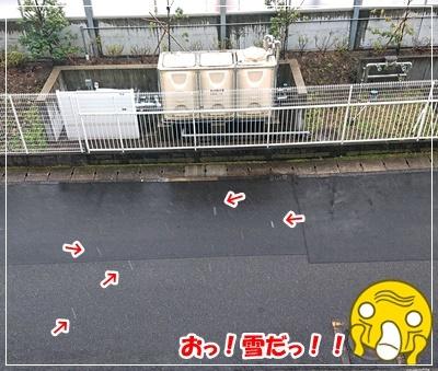 DSC_7999.jpg