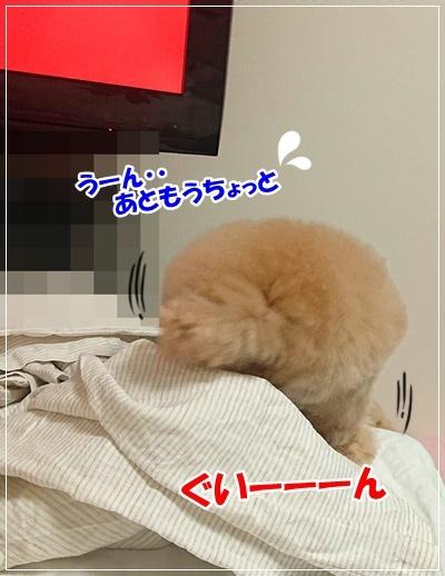 DSC_8349.jpg