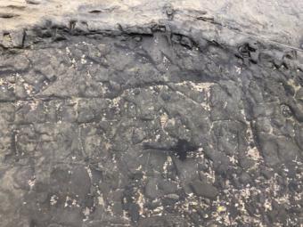 串本_橋杭岩の魚
