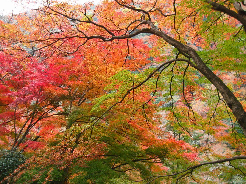 「秋の色どり」  箕面