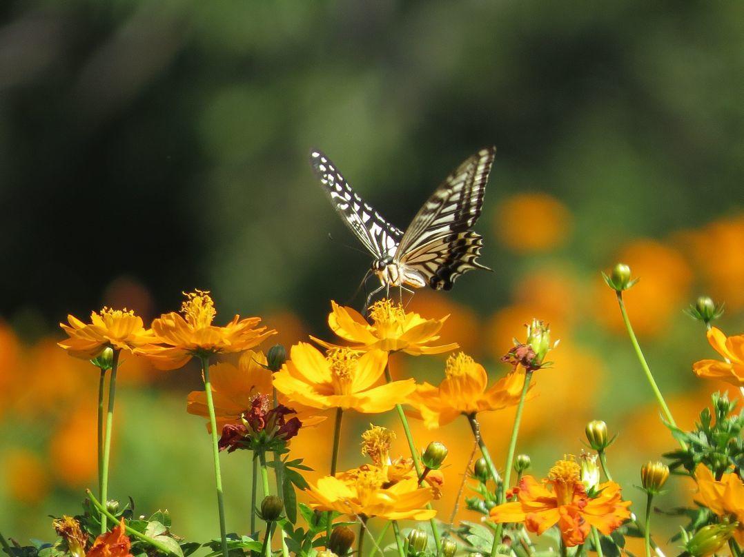 「黄金の花園」 万博花の丘