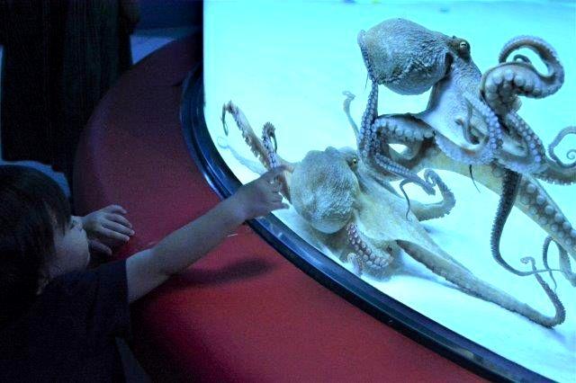 「初めての水族館」 須磨水族館