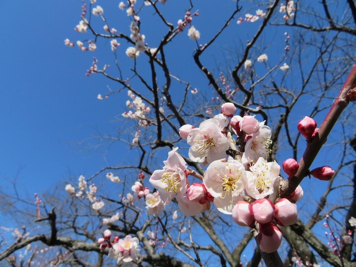 ②咲き香る薄ピンク