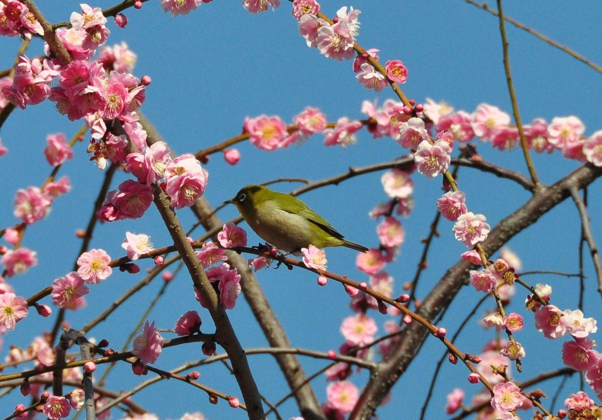 ⑤春の訪れ