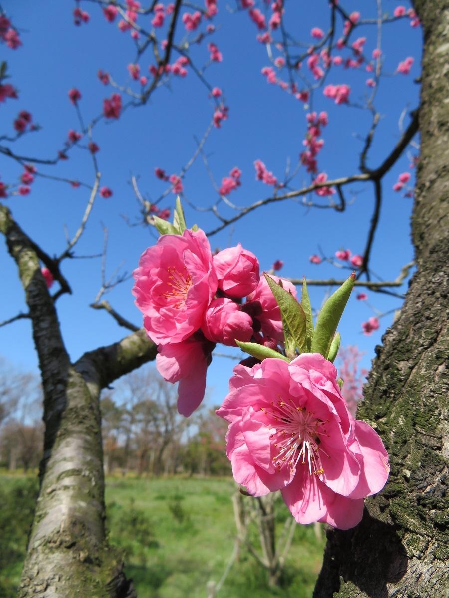 ⑥「春満開!!」